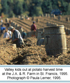 Valley kids help out at potato harvest time at the J.A. & R. Farm in St. Francis, 1995.  Photographer: Pauler Lerner,   2003.